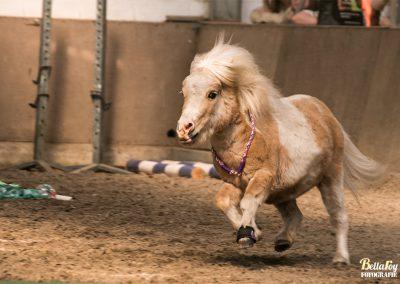 Paardenfotograaf Eindhoven Honey de agilitypony
