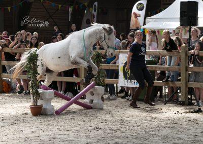 Paardenfotograaf op locatie In actie tijdens Go social event