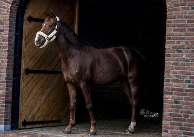 Paardenfotoshoot Eindhoven Jazzy in de poort