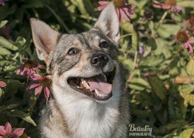 Mila the happy doggy