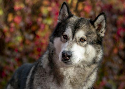 Hondenfotoshoot bossen Tiel Misha in de herfst