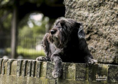 Hondenfotoshoot Nuenen Luna op de zonnewijzer