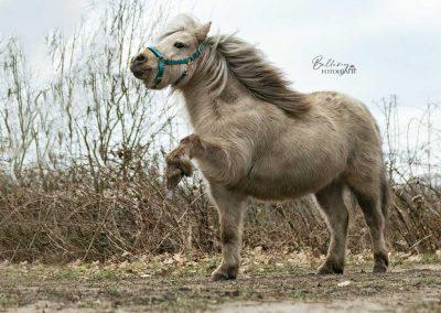 Paardenfotograaf Geldrop pip in actie