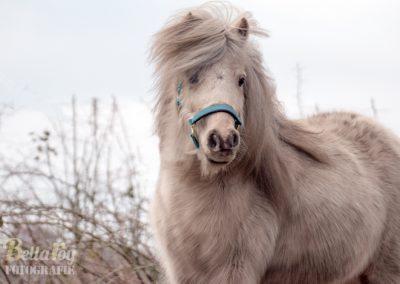 Paardenfotograaf Geldrop Pip op het velda