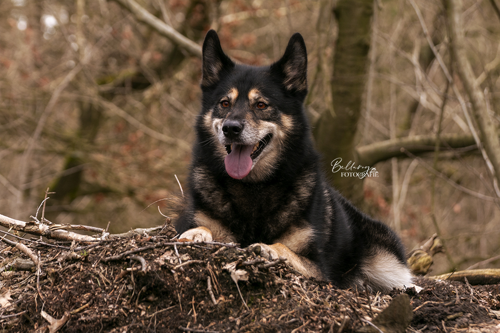 Hondenfotoshoot Lieshout Cleo op de berg