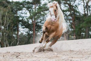 Paardenfotograaf Eindhoven Western paard in actie