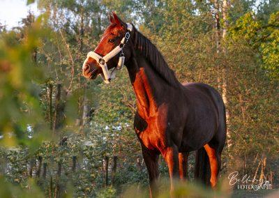 Paardenfotoshoot Jazzy in de zon