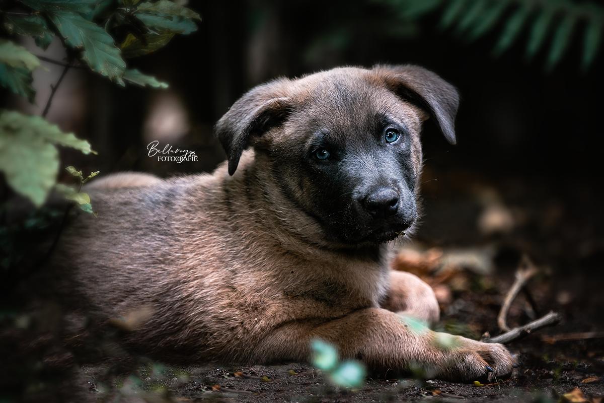 Hondenfotoshoot Nuenen schuilende Dexi