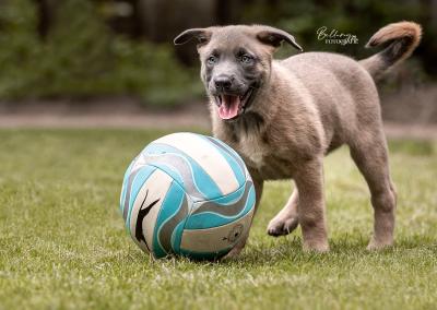 Hondenfotoshoot Nuenen spelende Dexi