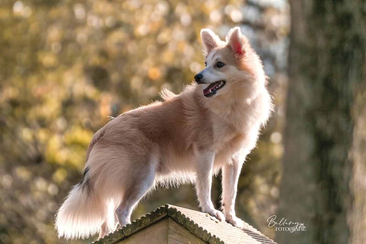 Hondenfotograaf Eindhoven Kili in de speeltuin