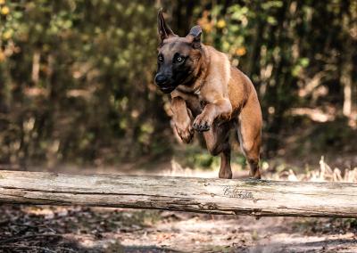 Hondenfotoshoot Nuenen Dexi in actie
