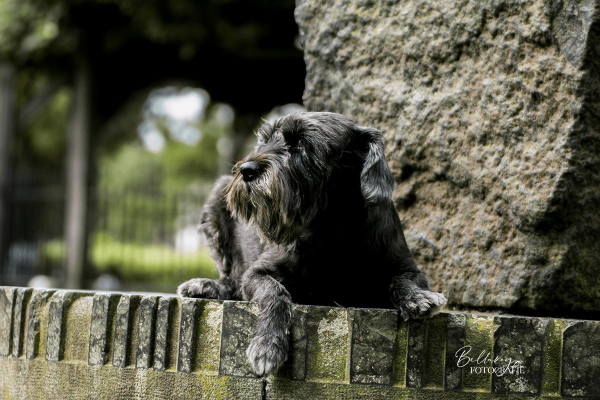 Hondenfotoshoot Nuenen Luna op de zonnesteen